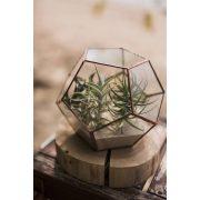 Üveg Dodekaéder, Florárium, terrárium, virágtartó