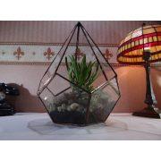 Ötszög alapú, kúpos, üveg florárium, terrárium, virágtartó