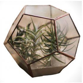 Florarium Glas, Terrarium, Dodekaeder, Blumentreppe